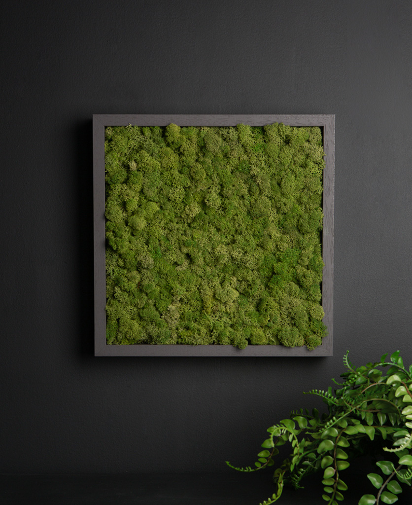 moss wall panel in dark grey frame on a black background