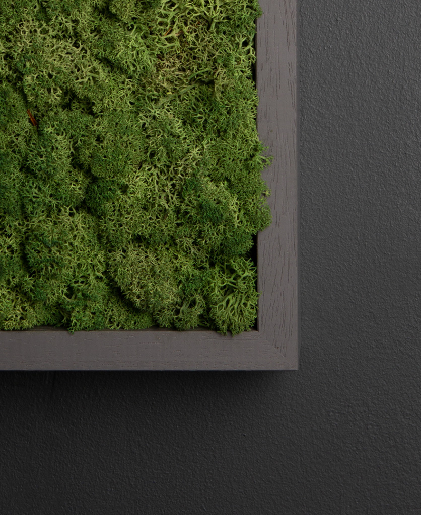 close up of dark green moss wall panel in dark grey frame on black background