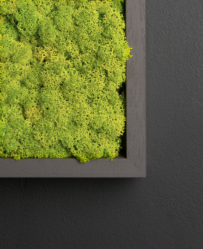 close up of spring green moss wall panel in dark grey frame on black background