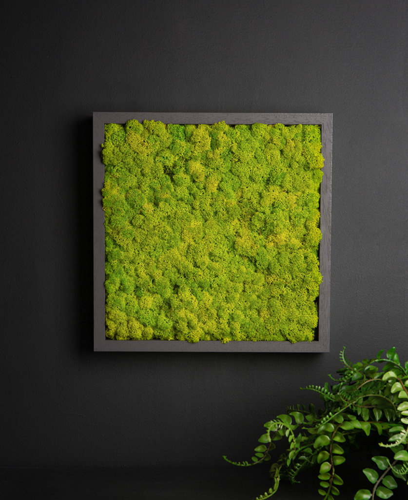 spring green moss wall panel in dark grey frame on black background