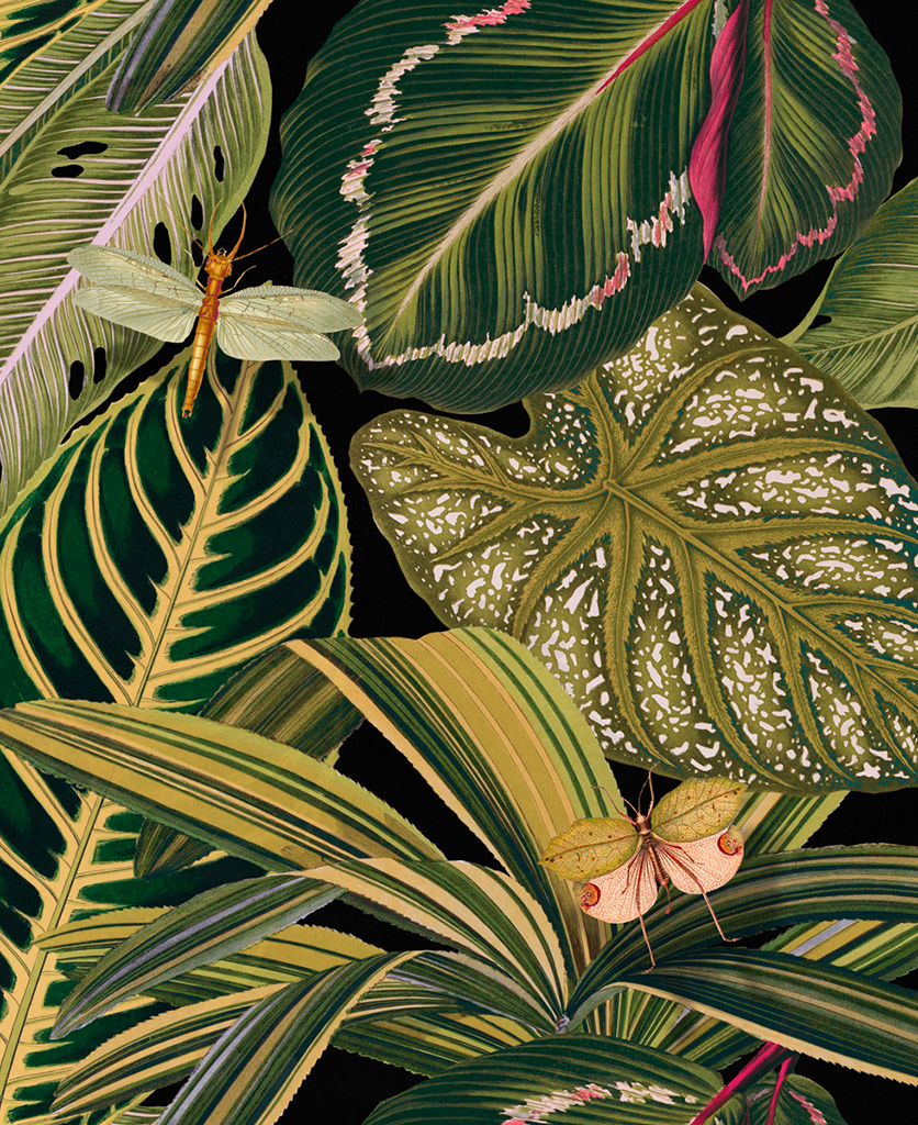 amazonia wallpaper close up