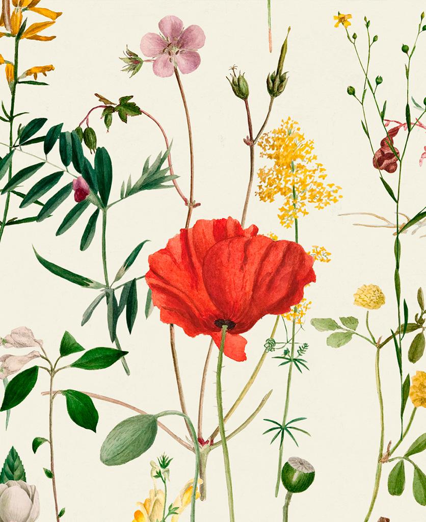 aquafleur wallpaper close up