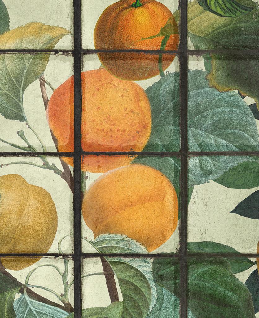 orangerie wallpaper close up