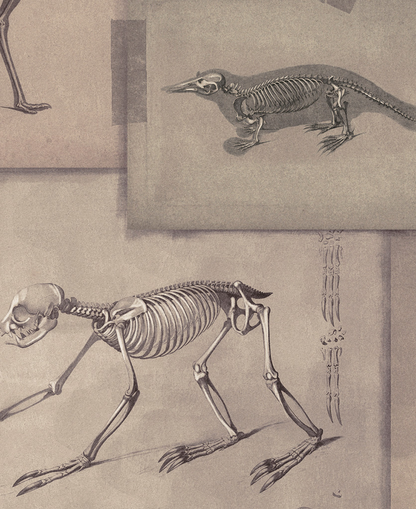 zooarchaeology wallpaper close up
