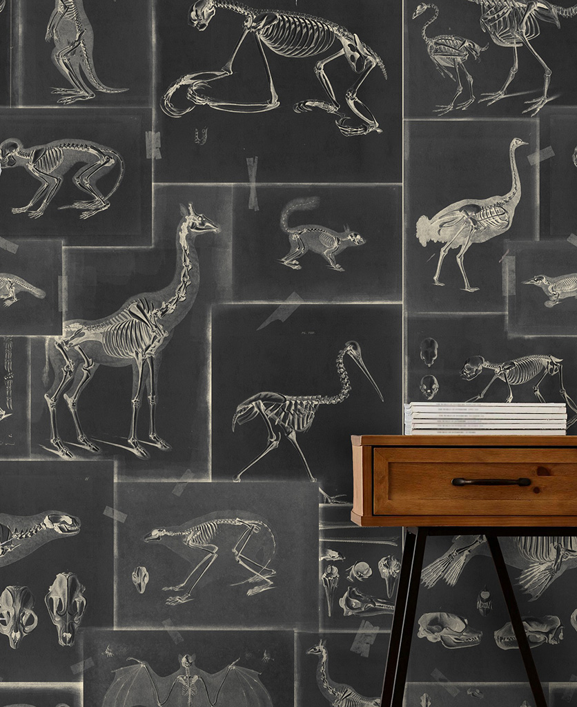 zooarchaeology anthracite wallpaper close up