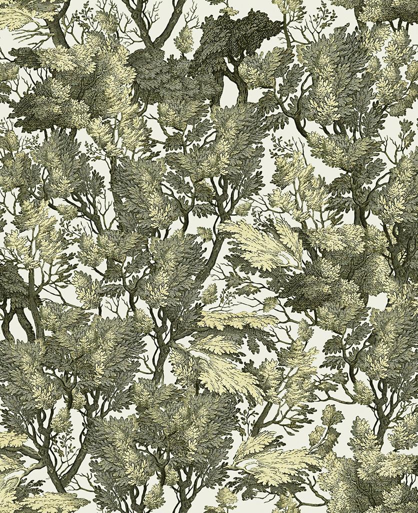 tree foliage wallpaper close up