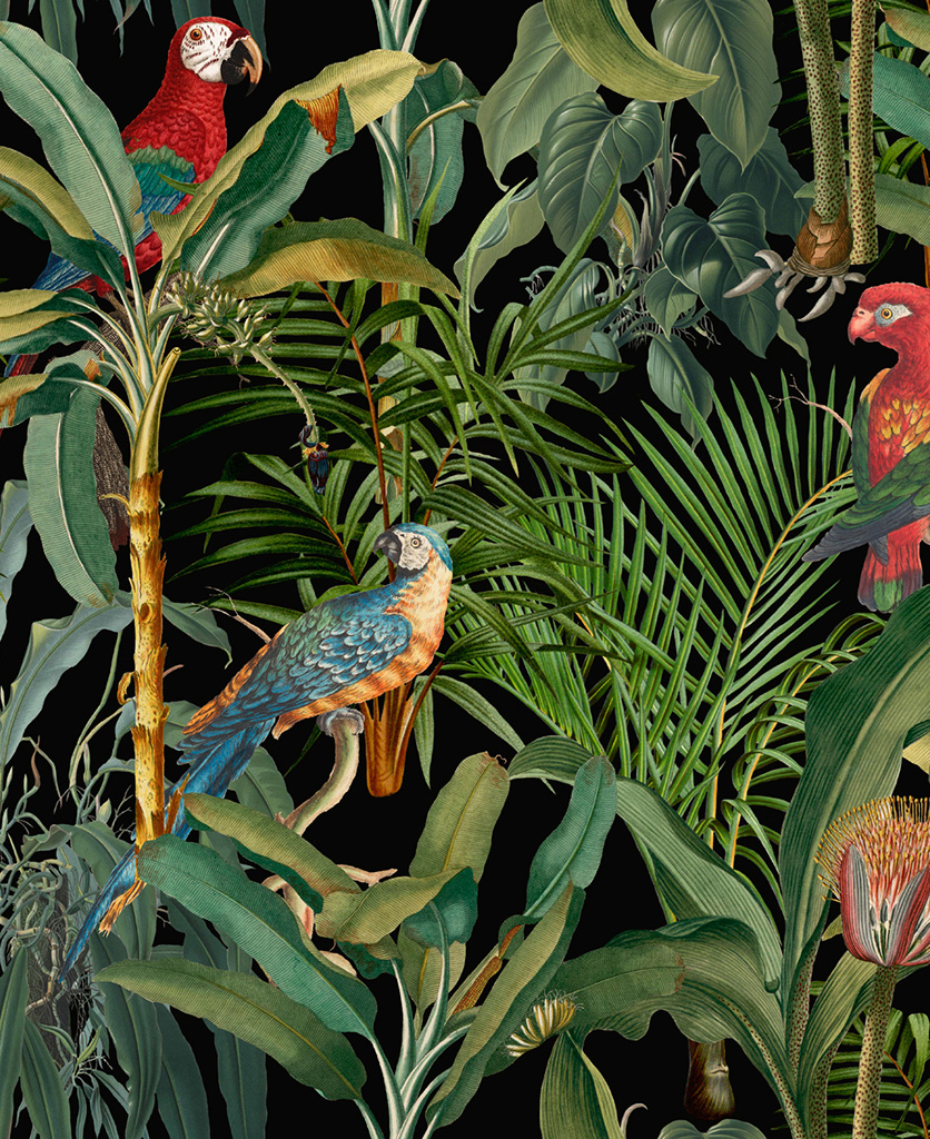 parrots of brasil anthracite wallpaper close up