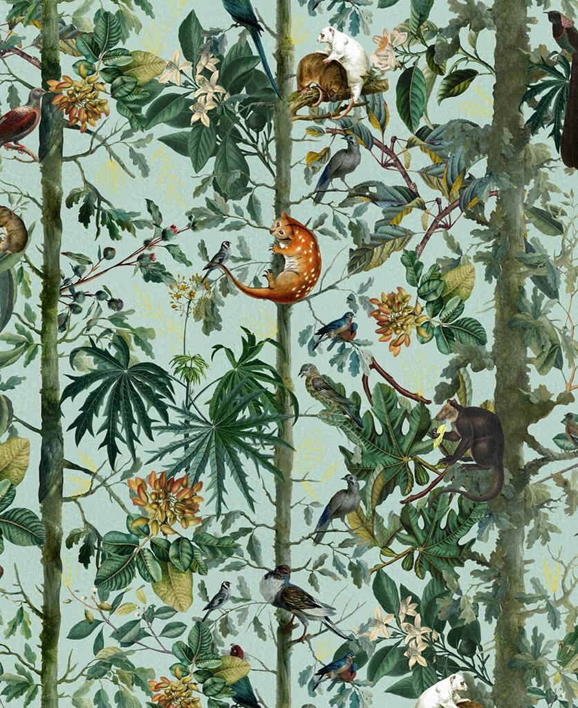 wildlife of papua wallpaper close up