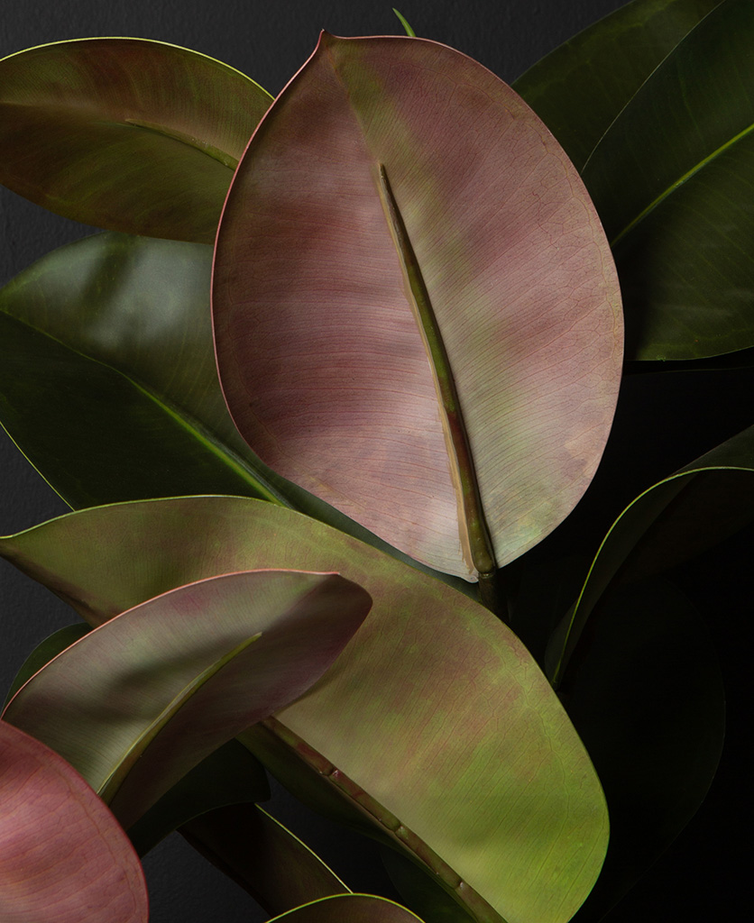 ficus elastica artificial plant close up