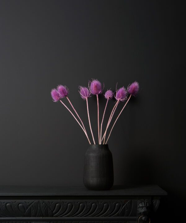 electro lilac cardi dried thistle stems in black vase on black background