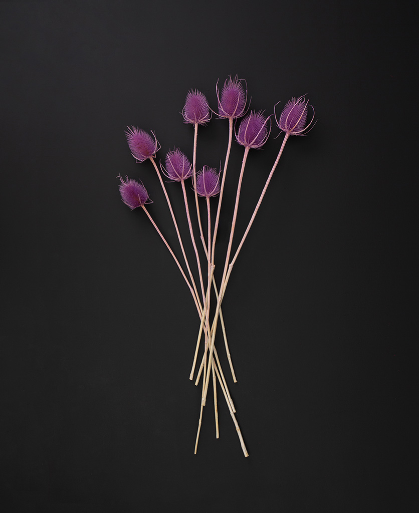 electro lilac cardi dried thistle stems flat lay on black background
