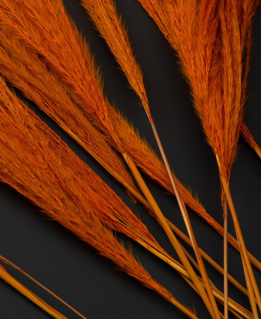 close up of orange stipa feathers on black background