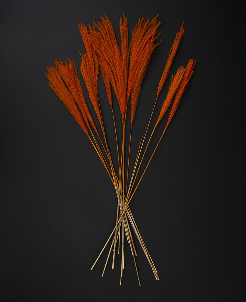 flat lay of orange stipa feathers on black background
