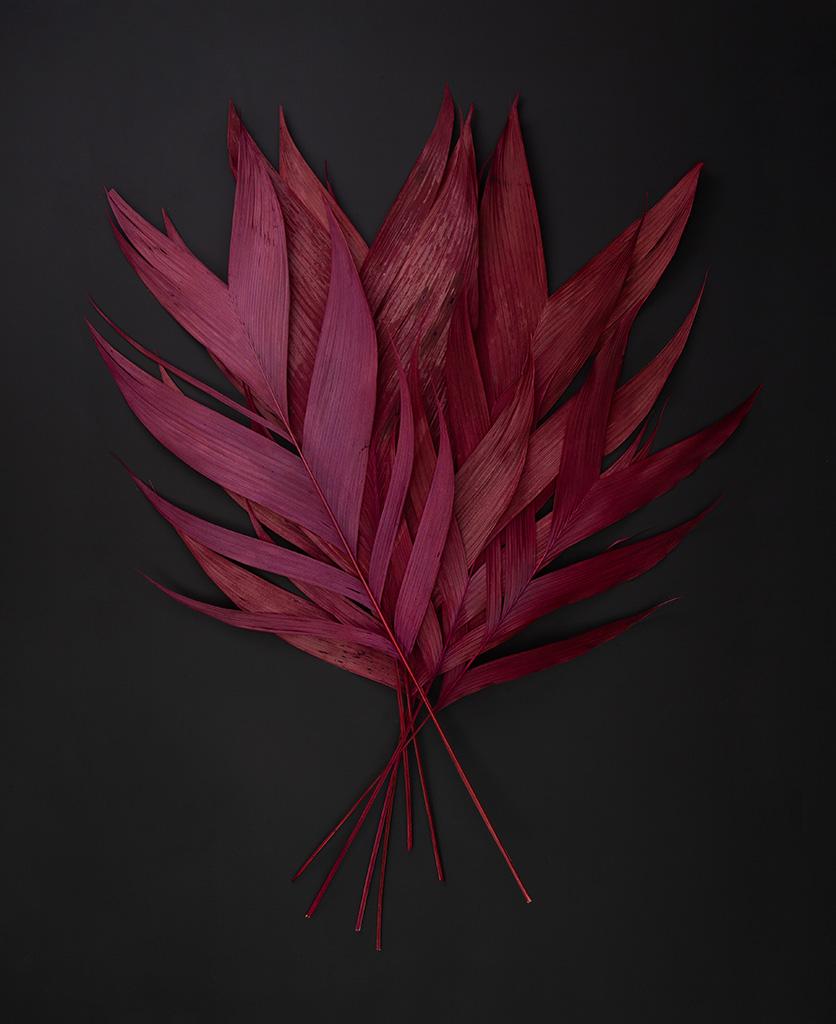 red leaf aricana flat lay on black background