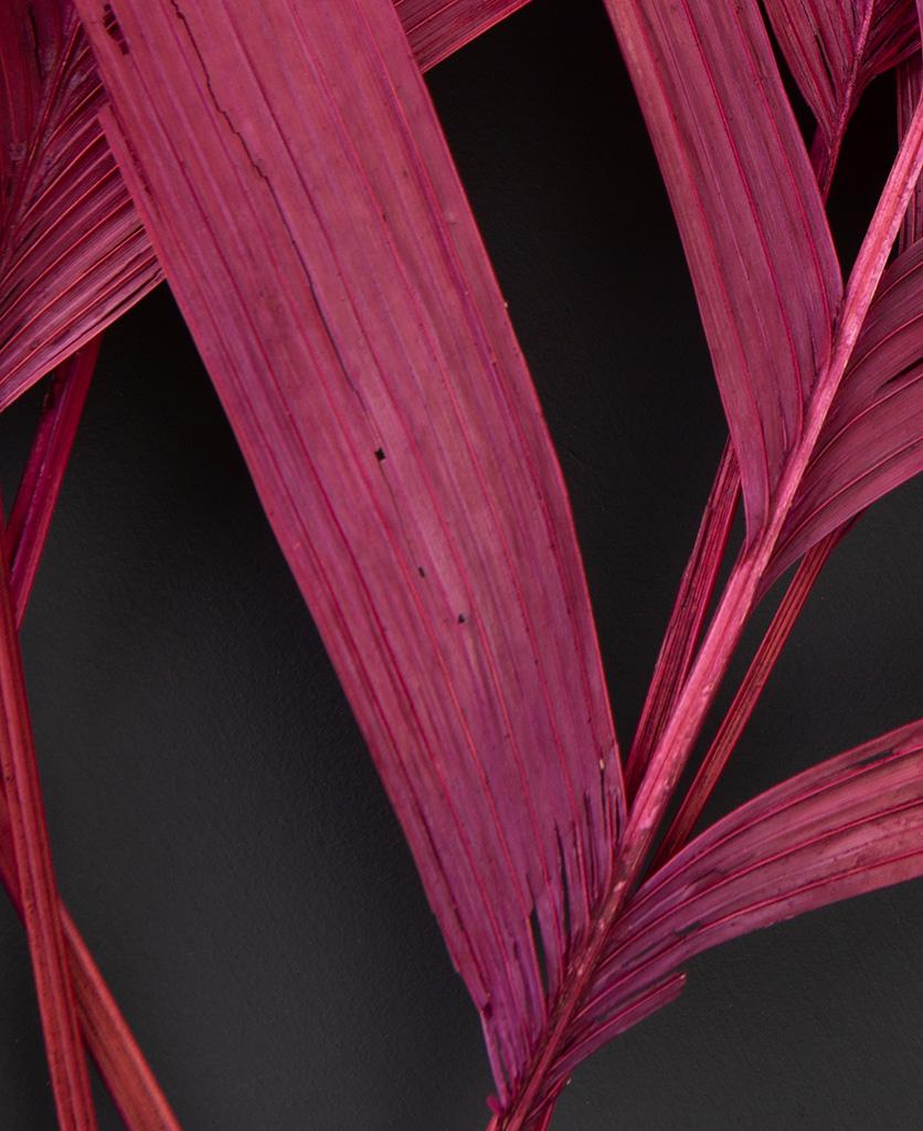 red leaf aricana foilage close up