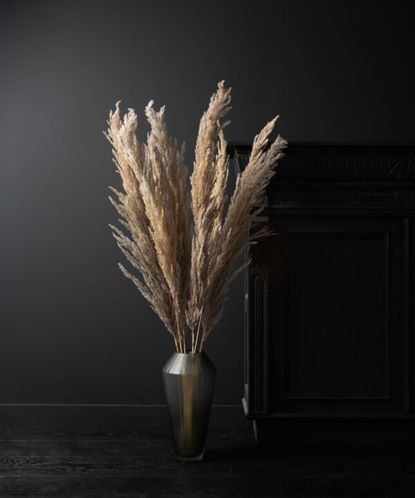 pampas grass in long glass vase on black background stems foliage