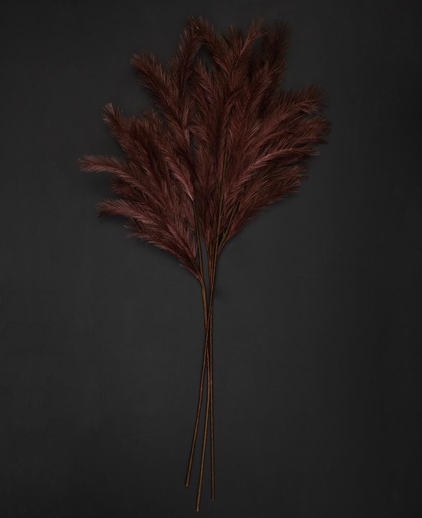 panicle grass flat lay foliage on black background