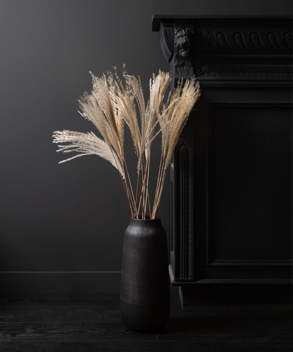 silver grass feathers on black background