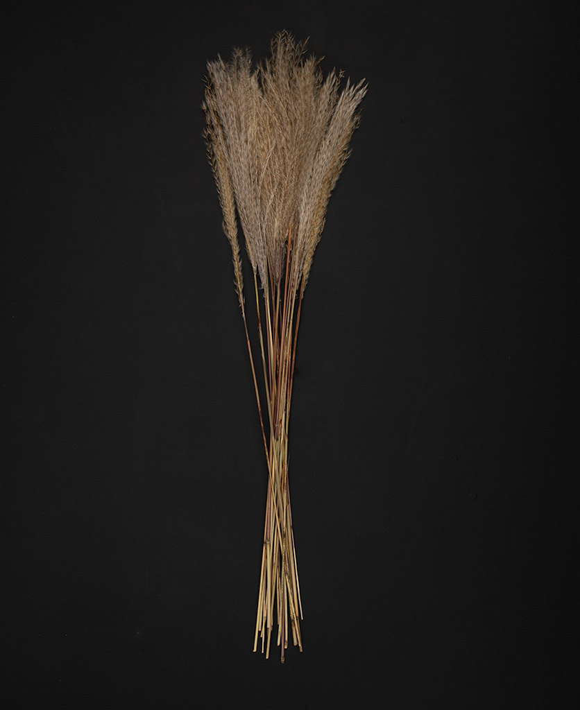 silver grass feathers flay lay on black background