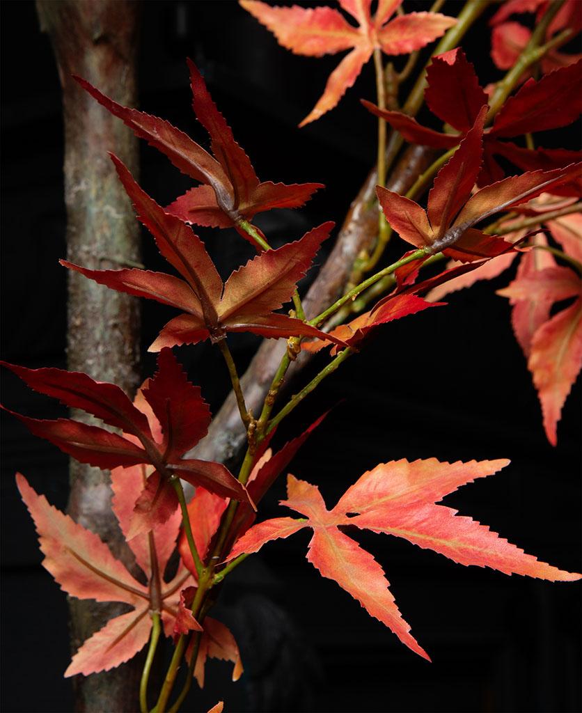 acer tree close up